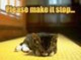 Stop Kitten