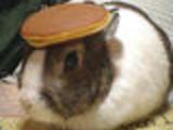 Understand BunnyPancake