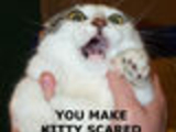 Why KittieScared