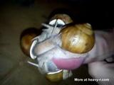 Cumshot With No Hands - Snail Videos